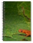 Easterm Newt Nnotophthalmus Viridescens 13 Spiral Notebook