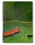 Easterm Newt Nnotophthalmus Viridescens 14 Spiral Notebook