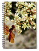 Eastern Amberwing On Wild Buckwheat Spiral Notebook