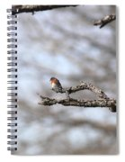Eastern Bluebird - Old And Alive Spiral Notebook