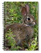 Eastern Cottontail Rabbit Dmam005 Spiral Notebook
