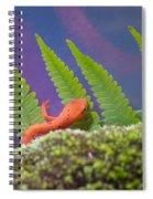 Eastern Newt 1 Spiral Notebook
