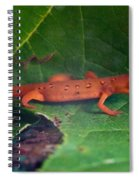 Eastern Newt Notophthalmus Viridescens 27 Spiral Notebook