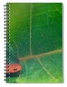 Eastern Newt Notophthalmus Viridescens 28 Spiral Notebook
