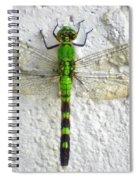 Eastern Pondhawk Dragonfly Spiral Notebook