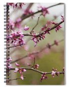 Eastern Redbud Asian Style Spiral Notebook