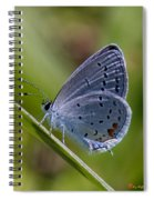 Eastern Tailed-blue Butterfly Din045 Spiral Notebook