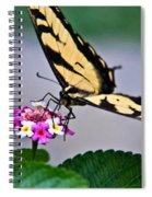 Eastern Tiger Swallowtail 5 Spiral Notebook
