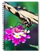 Eastern Tiger Swallowtail 9 Spiral Notebook