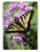 Canadian Tiger Swallowtail On Phlox Spiral Notebook
