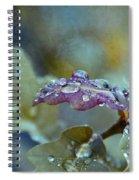 Eau De Vie Spiral Notebook