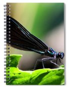 Ebony Jewelwing In The Spotlight Spiral Notebook
