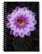 Echinopsis Spiral Notebook