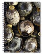 Eggs Of Stick Insect Spiral Notebook