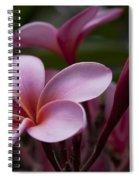 Eia Ku'u Lei Aloha Kula - Pua Melia - Pink Tropical Plumeria Maui Hawaii Spiral Notebook