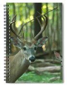 Eight Point And Fawn_9532_4367 Spiral Notebook
