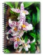 Elegant Beallara Orchid Spiral Notebook