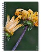 Elegant Daisies Spiral Notebook