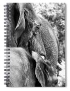 Elephant Ears Spiral Notebook