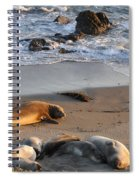 Elephant Seals At Piedras Blancas Spiral Notebook