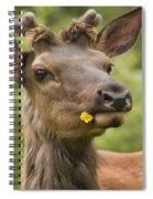 Elk Cervus Canadensis With Dandelion In Spiral Notebook