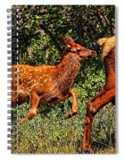 Elk Fawn Spiral Notebook