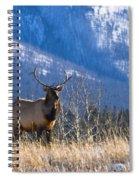 Elk In Forest, Banff National Park Spiral Notebook
