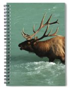 Elk In The Athabasca River Spiral Notebook
