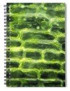 Elodea Leaf Spiral Notebook