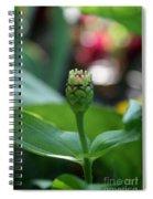 Emerging Into Summer Spiral Notebook
