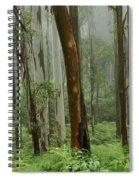 Australia Enchanted Forest Spiral Notebook