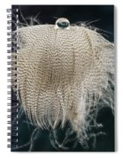 End Of The Feather Spiral Notebook