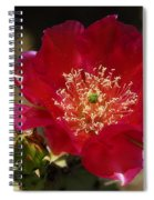 Englemann's Prickly Pear Cactus  Spiral Notebook