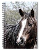 Equine Trance Spiral Notebook