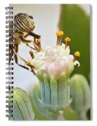 Eristalinus Taeniops Spiral Notebook