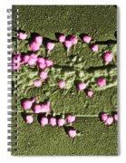 Escherichia Coli On A Cell Wall Spiral Notebook