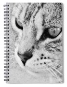 Eternal Stare Down Spiral Notebook