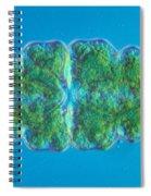 Euastrum Sp. Algae Lm Spiral Notebook