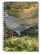 Eurasian Dove Spiral Notebook