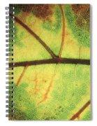 European Beech Fagus Sylvatica Detail Spiral Notebook