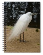Exotic Bird Spiral Notebook