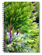 Extreme Shades Of Green Spiral Notebook