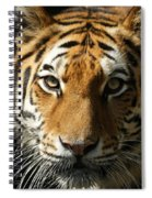 Eye Contact Spiral Notebook