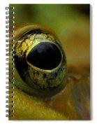 Eye Of Frog Spiral Notebook