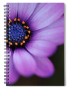 Eye Of The Daisy Spiral Notebook