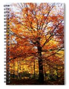 Eye Of The Forest Spiral Notebook