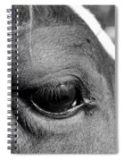 Eye Of The Horse Black And White Spiral Notebook