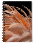 Fabulous Flamingo Feathers Spiral Notebook