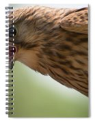 Falcon Spiral Notebook
