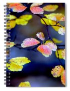 Fall Color Change Spiral Notebook